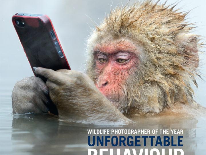 Bildverk med årets djur- & natur-fotografi