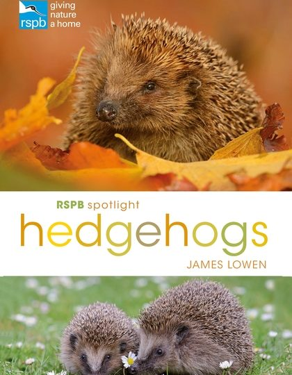 James Lowen: Hedgehogs