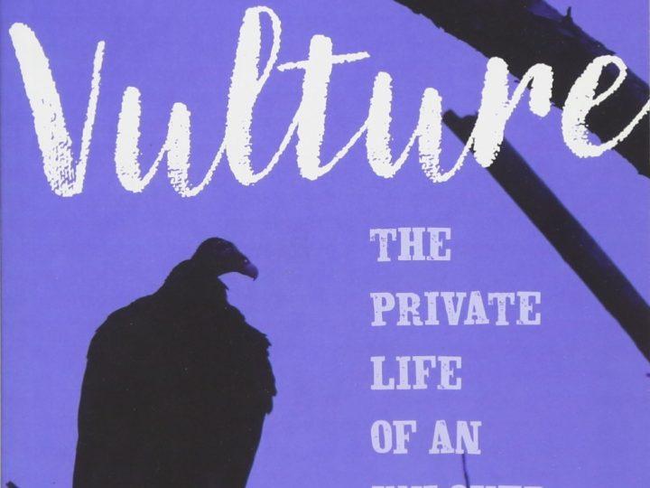Kate Fallon: Vulture